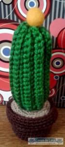 Cactus bolita amarilla