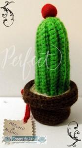 Cactus bolita roja 2